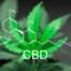 Best Medical Practice CBD Oil in Texas