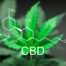 Best Medical Practice CBD Oil in Texas